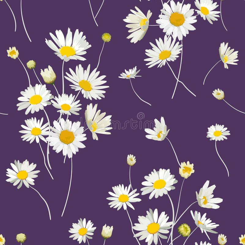 Kwiecisty Bezszwowy wzór z Chamomile kwiatami Naturalny tło z stokrotka kwiatami dla wiosny lata projekta tapety ilustracji