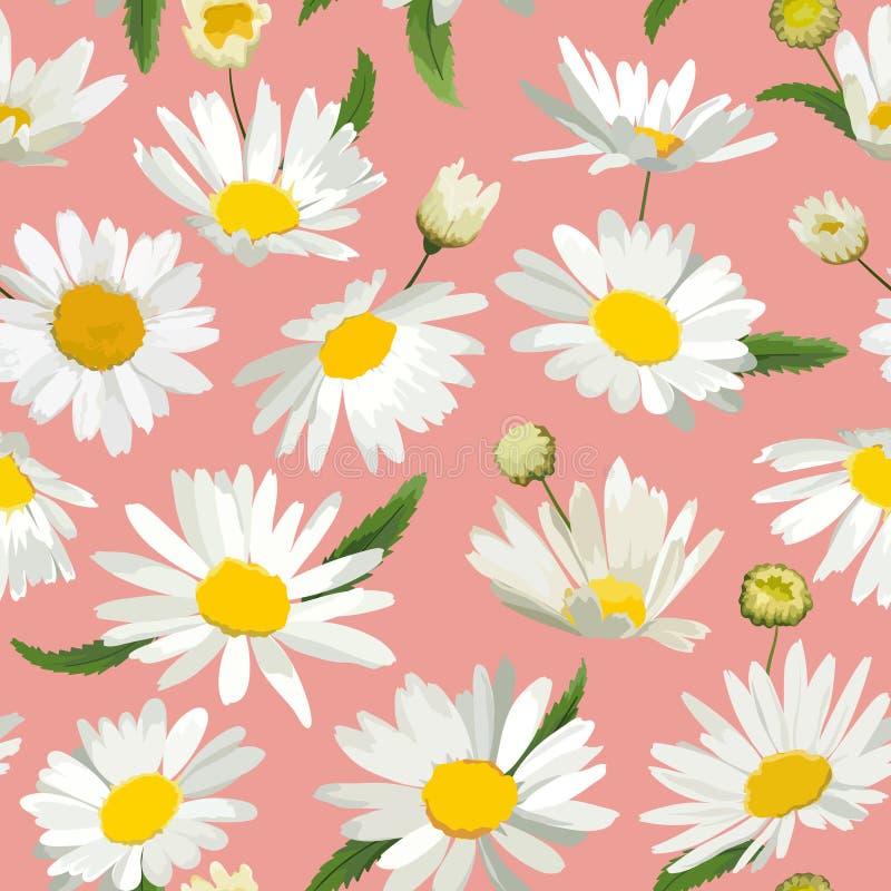 Kwiecisty Bezszwowy wzór z Chamomile kwiatami Naturalny tło z stokrotka kwiatami dla wiosny lata projekta tapety royalty ilustracja