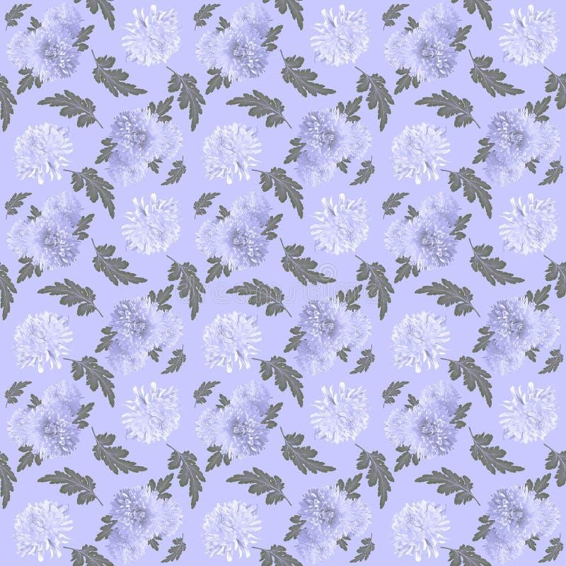 Kwiecisty bezszwowy wzór z białymi chryzantemami na lilym tle ilustracji