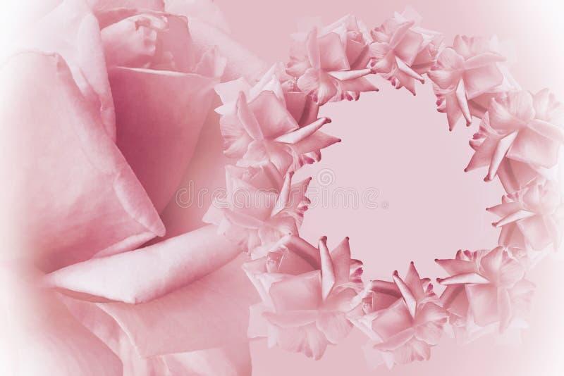 Kwiecisty biały piękny tło tła składu powoju kwiatu tulipany biały Rama różowe kwiat róże na świetle - różowy tło Różany cl zdjęcia stock
