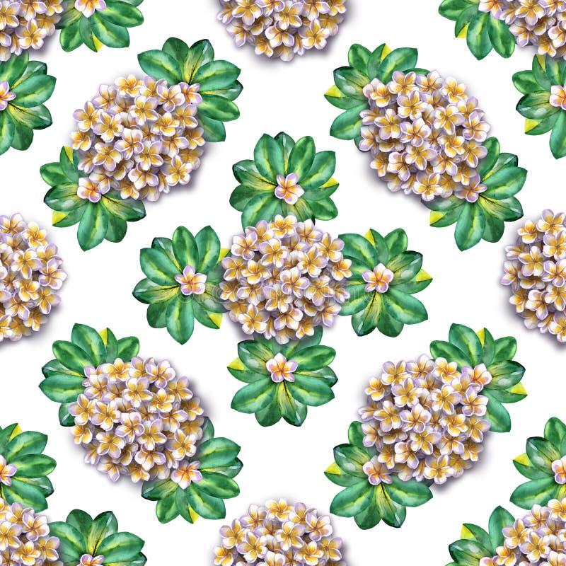 kwiecisty deseniowy tropikalny Akwarela kwitnie plumeria Białego egzotycznego kwiatu frangipani wielostrzałowy tło zdjęcia stock