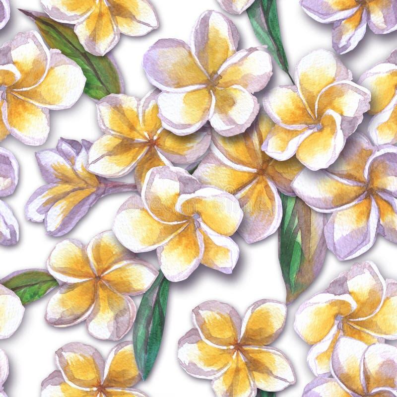 kwiecisty deseniowy tropikalny Akwarela malująca kwitnie plumeria Białego egzotycznego kwiatu frangipani wielostrzałowy tło zdjęcie royalty free