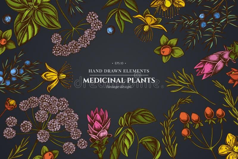Kwiecisty projekt na ciemnym tle z arcydzięglem, basil, jałowiec, hypericum, rozmaryn, turmeric ilustracja wektor