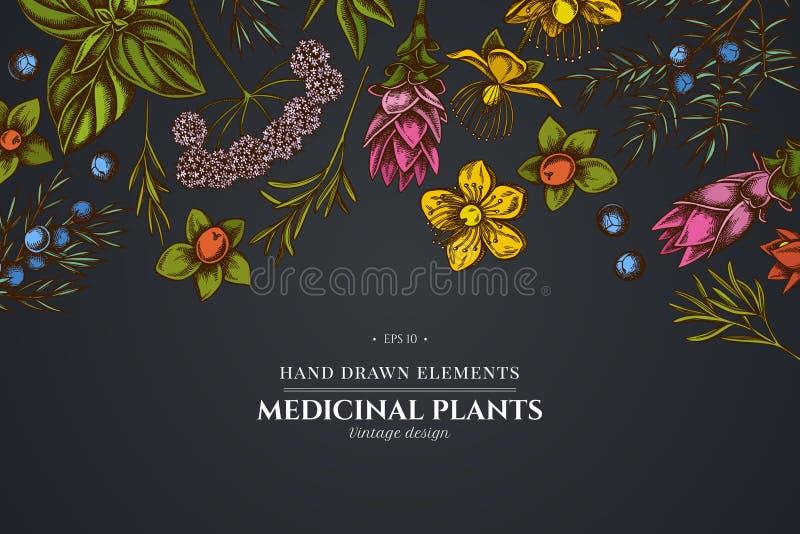 Kwiecisty projekt na ciemnym tle z arcydzięglem, basil, jałowiec, hypericum, rozmaryn, turmeric ilustracji