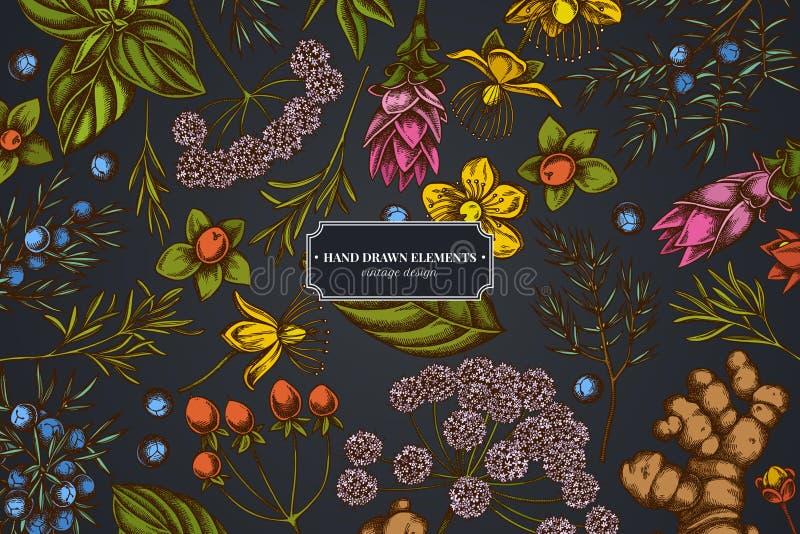 Kwiecisty projekt na ciemnym tle z arcydzięglem, basil, jałowiec, hypericum, rozmaryn, turmeric royalty ilustracja