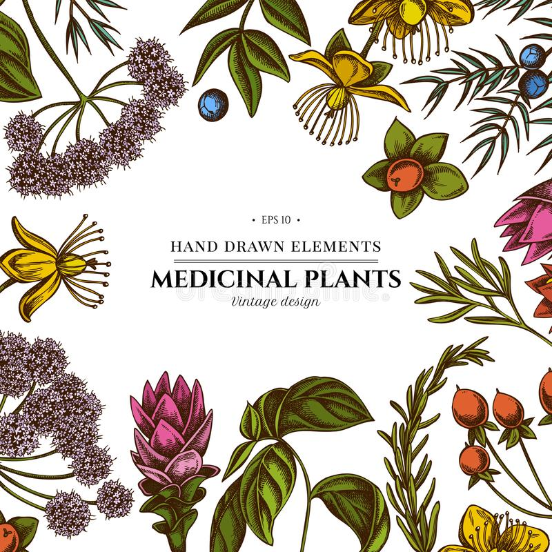 Kwiecisty projekt z barwionym arcydzięglem, basil, jałowiec, hypericum, rozmaryn, turmeric ilustracja wektor