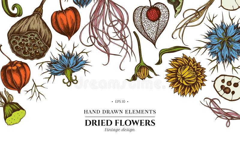 Kwiecisty projekt z barwionym czarnym karolkiem, piórkowa trawa, helichrysum, lotos, lunaria, pęcherzyca ilustracja wektor