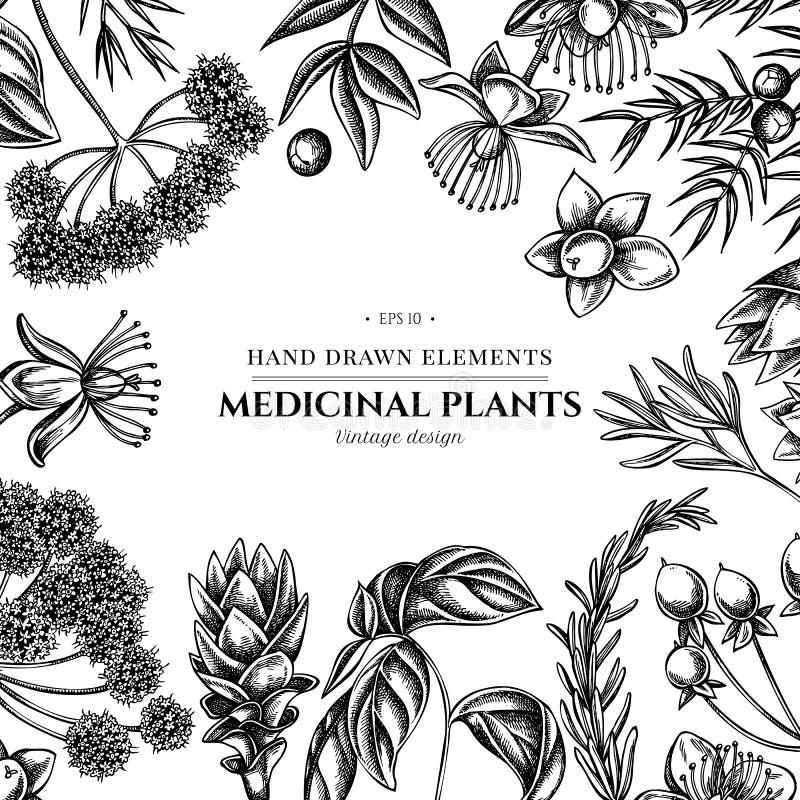 Kwiecisty projekt z czarny i biały arcydzięglem, basil, jałowiec, hypericum, rozmaryn, turmeric ilustracji