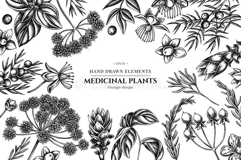 Kwiecisty projekt z czarny i biały arcydzięglem, basil, jałowiec, hypericum, rozmaryn, turmeric ilustracja wektor