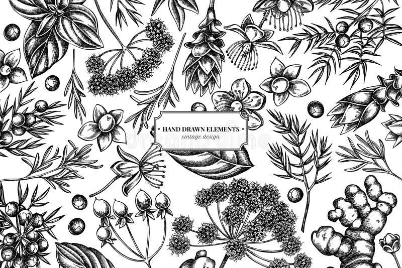 Kwiecisty projekt z czarny i biały arcydzięglem, basil, jałowiec, hypericum, rozmaryn, turmeric royalty ilustracja