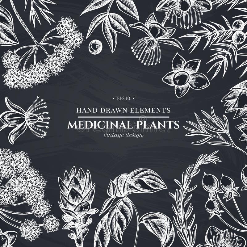 Kwiecisty projekt z kredowym arcydzięglem, basil, jałowiec, hypericum, rozmaryn, turmeric ilustracji
