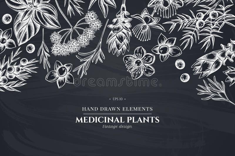 Kwiecisty projekt z kredowym arcydzięglem, basil, jałowiec, hypericum, rozmaryn, turmeric ilustracja wektor