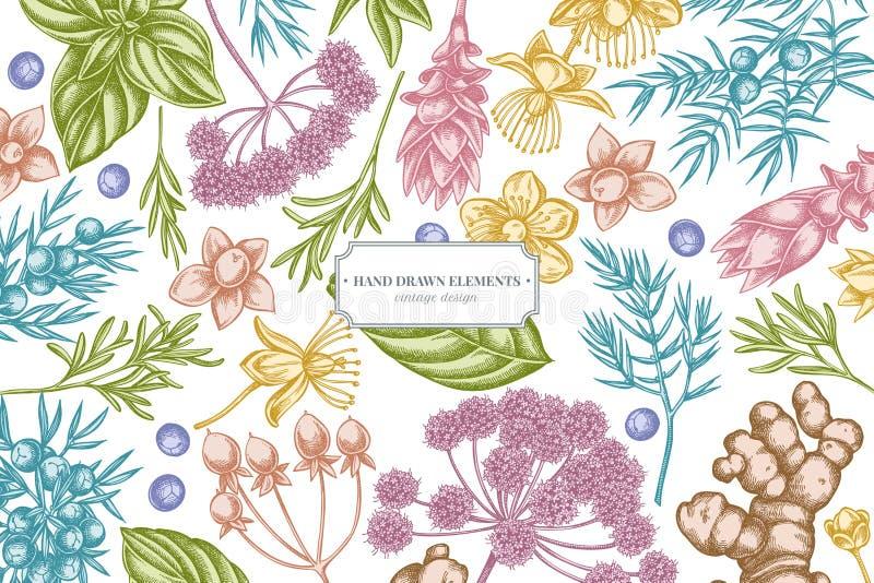 Kwiecisty projekt z pastelowym arcydzięglem, basil, jałowiec, hypericum, rozmaryn, turmeric royalty ilustracja