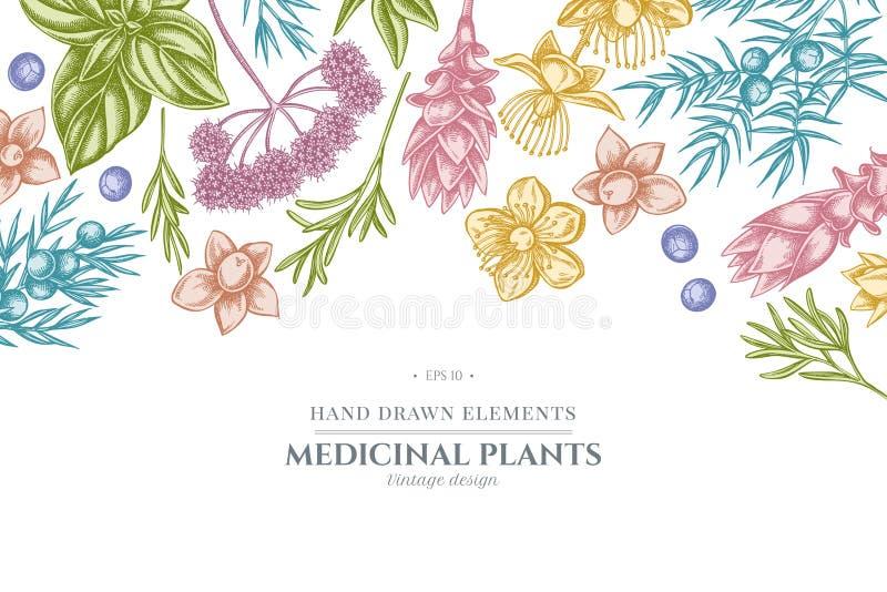 Kwiecisty projekt z pastelowym arcydzięglem, basil, jałowiec, hypericum, rozmaryn, turmeric ilustracji
