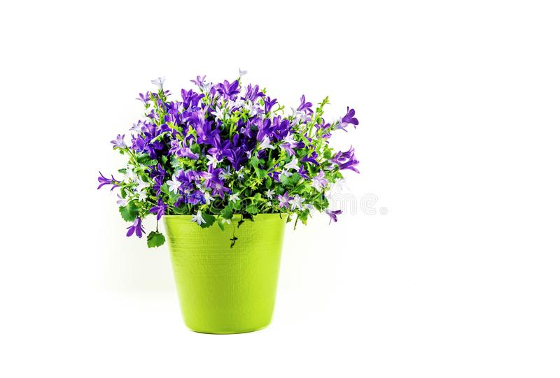 Kwiecisty przygotowania w Zielonej wazie Odizolowywającej na Białym tle - zdjęcia stock