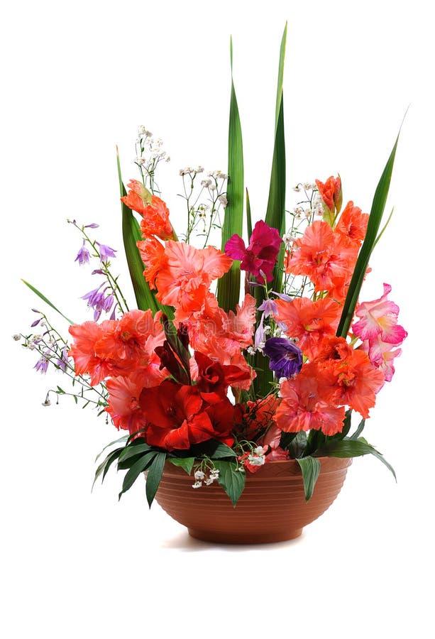 kwiecisty składu gladiolus zdjęcia stock