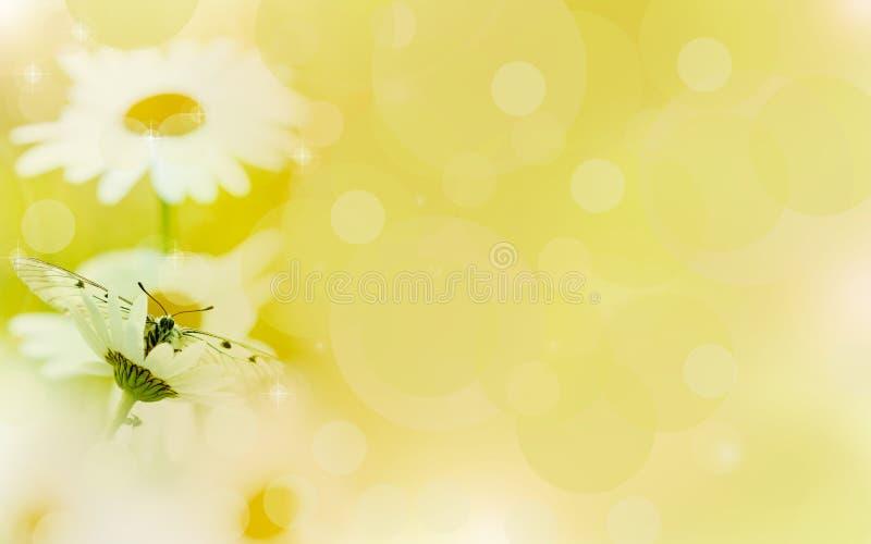 Kwiecisty tło, chamomile w promieniach światło i motyl, obraz royalty free