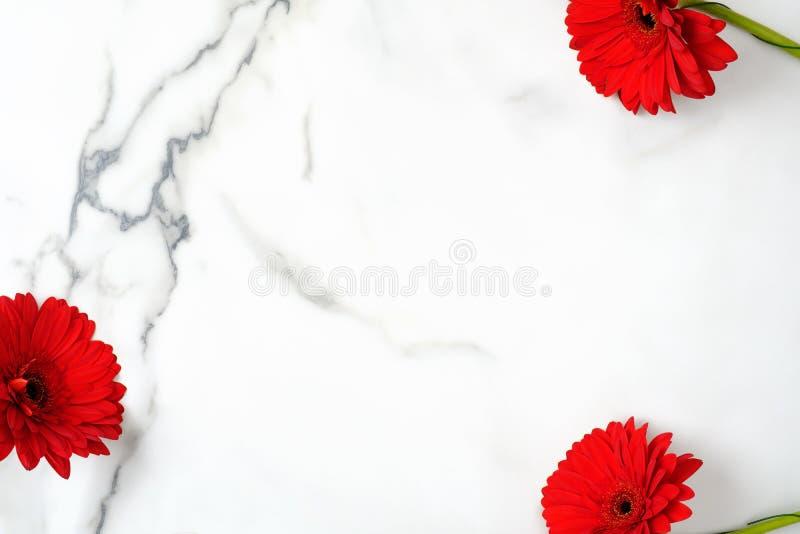 Kwiecisty tło z czerwonymi stokrotka kwiatami Rama gerber na marmurowym tle z kopii przestrzenią Odg?rny widok, koszt sta?y zdjęcia royalty free
