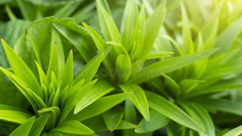 Kwiecisty kwiecisty t?o kwiaty t?a green obraz stock