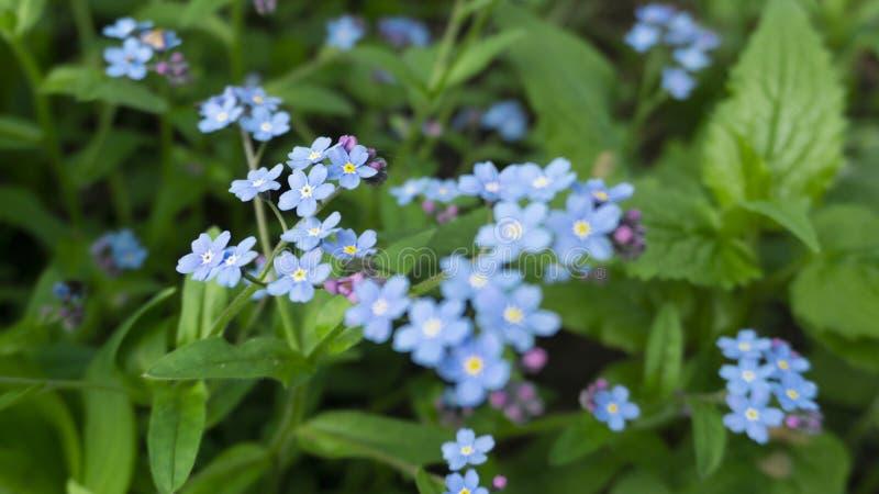 Kwiecisty kwiecisty t?o kwiaty t?a green fotografia stock