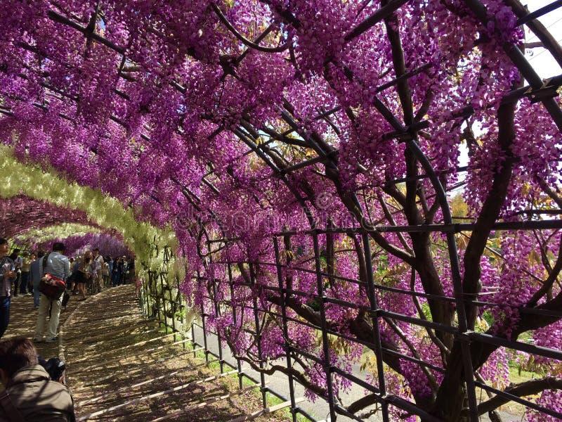 Kwiecisty tunel w Japonia obrazy stock