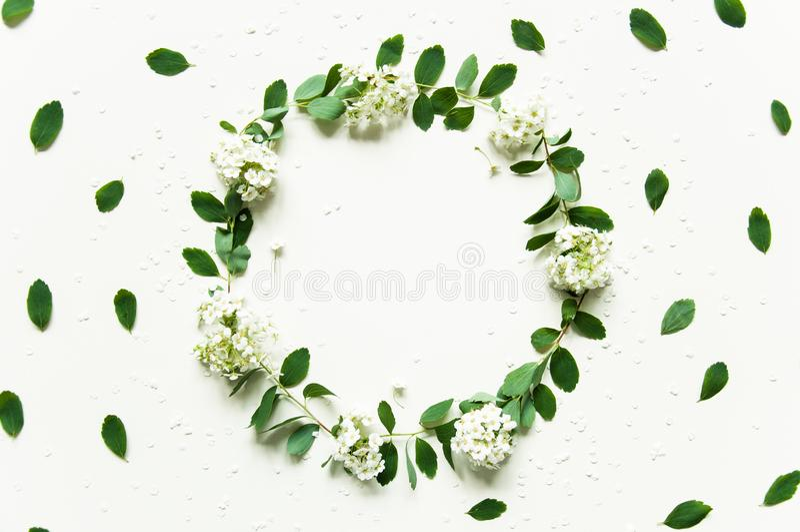 Kwiecisty wiosny tło na bielu Wianek greenery Ziele? li?cie i biali kwiaty Gratulacyjny tło dla wakacje fotografia stock