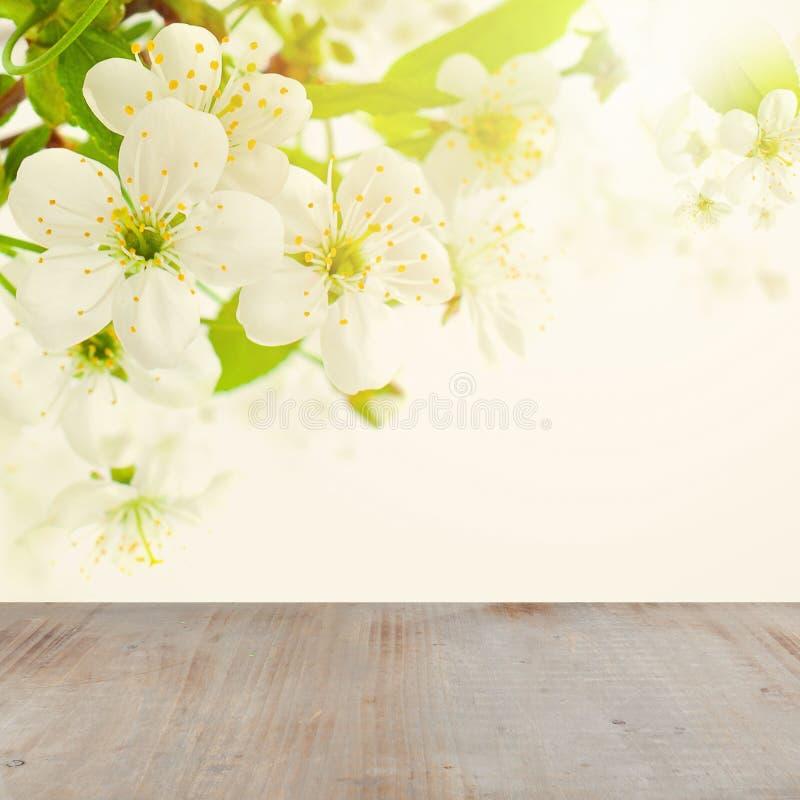 Kwiecisty wiosny tło z Białym Czereśniowym drzewem Kwitnie zdjęcie royalty free