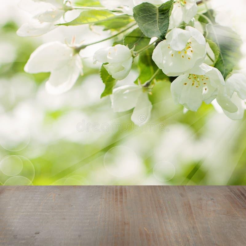 Kwiecisty wiosny tło z Białymi jabłoń kwiatami zdjęcia royalty free