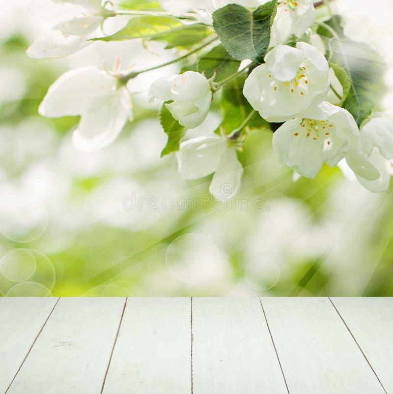 Kwiecisty wiosny tło z Białymi kwiatami obraz royalty free