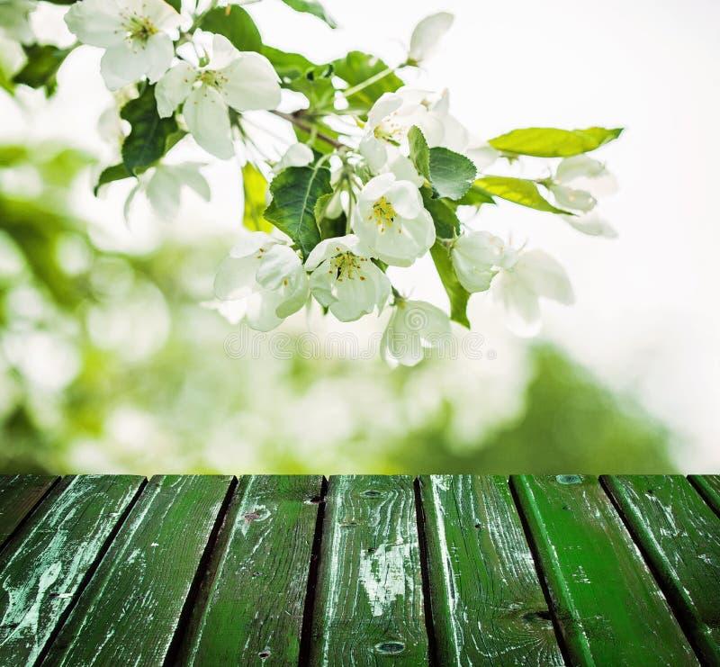 Kwiecisty wiosny tło z kwiatami, zieleń liście zdjęcia stock