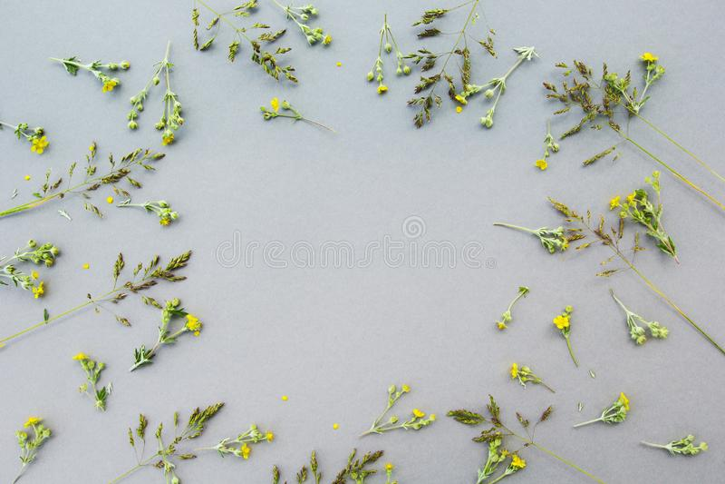 Kwiecisty wzór biali wildflowers, zieleń opuszcza, rozgałęzia się na szarym tle, przestrzeń dla teksta w centrum Mieszkanie, wier fotografia stock