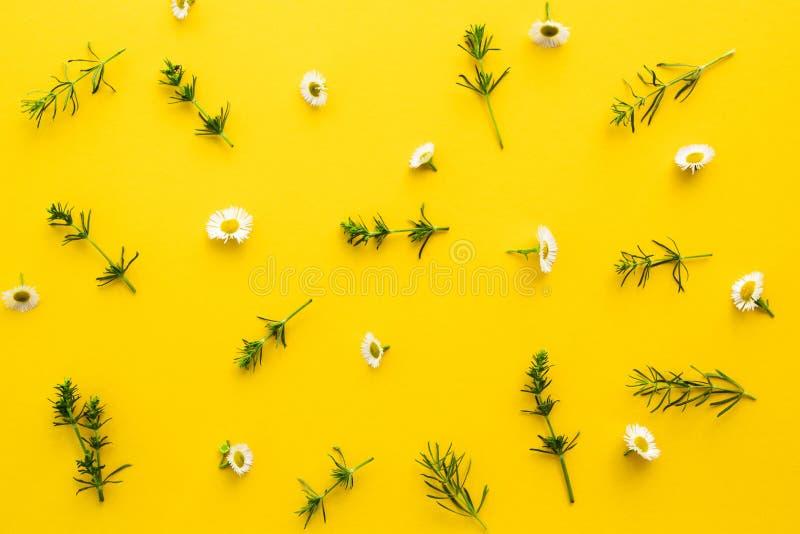 Kwiecisty wzór od białych wildflowers, zieleń liście, gałąź na żółtym tle Mieszkanie, odgórny widok bukietów formie ciągnąć wzoru obraz stock