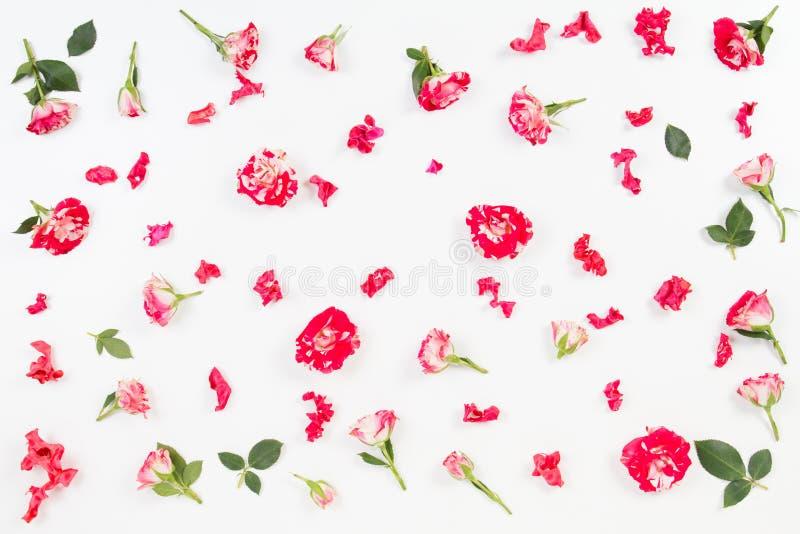 Kwiecisty wzór robić róże, zieleń liście, gałąź na białym tle Mieszkanie nieatutowy, odgórny widok obraz stock