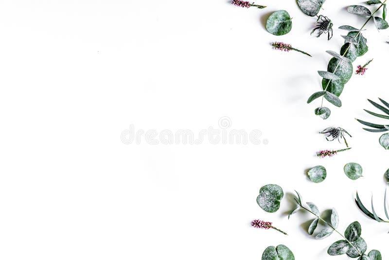Kwiecisty wzór z zielenią opuszcza na białego tła odgórnym widoku mo zdjęcia stock