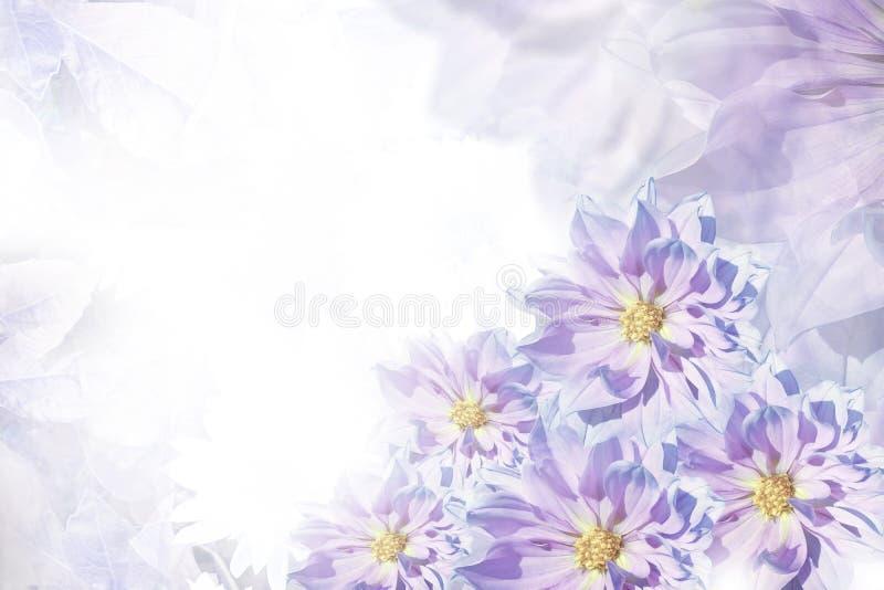 Kwiecistych menchii piękny tło tła składu powoju kwiatu tulipany biały Kartka z pozdrowieniami dla wakacje od kwiatów dalie fotografia stock