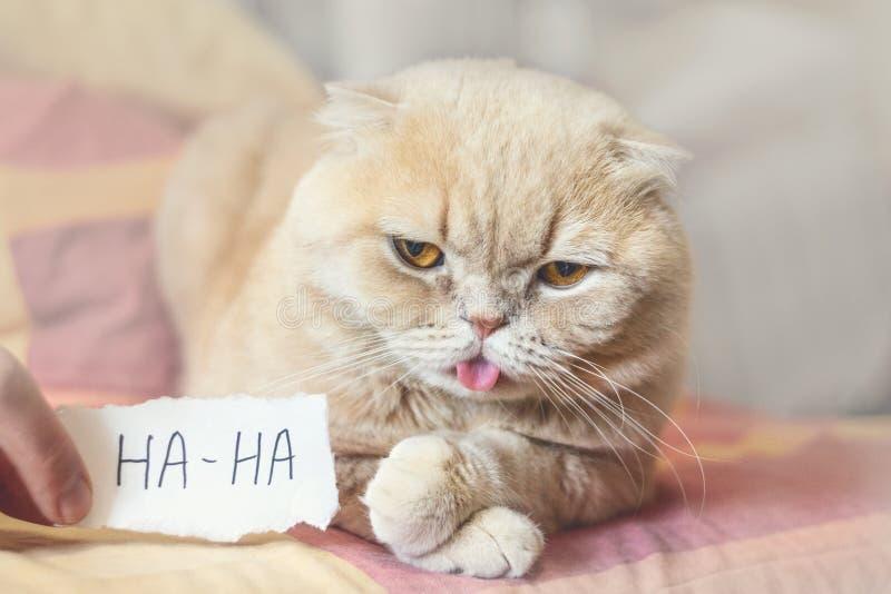 Kwietni durni dnia pojęcie z śmiesznym markotnym szkockim kotem i papier ciąć na arkusze z HAHA 1 Kwiecień, Wszystkie durni dzień fotografia stock