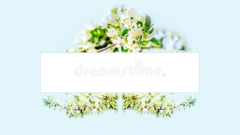 Kwitnąć czereśniowego drzewa kwiatów ramę zdjęcia stock