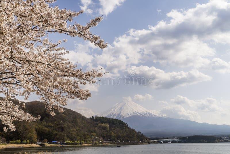Kwitnąć drzewa w Kawaguchi jeziornym terenie z górą Fuji w tle, Japonia obrazy royalty free