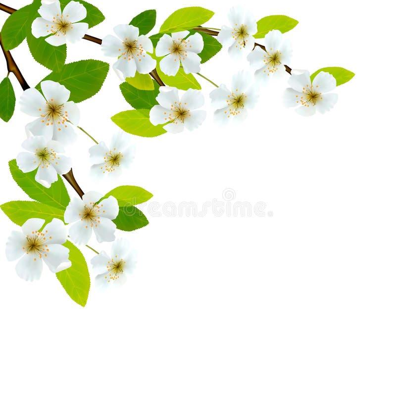 Kwitnąć drzewnego śniadanio-lunch z wiosna kwiatami royalty ilustracja