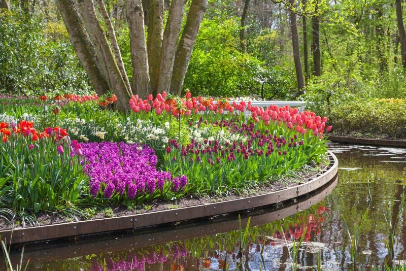 Kwitnąć kwitnie w parku z stawem zdjęcia stock