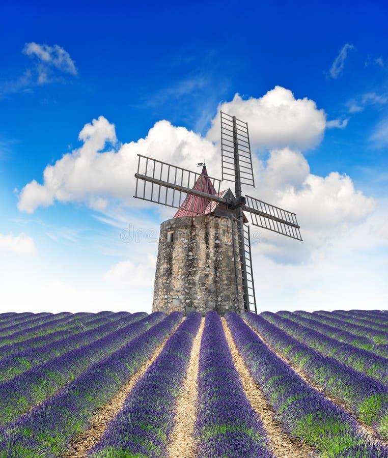 Kwitnąć lawendy pole z wiatrowym młynem i pięknym niebieskim niebem obraz royalty free