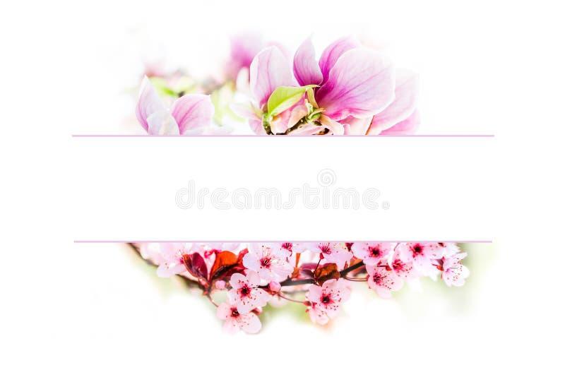 Kwitnąć magnoliowego kwiatu i czereśniowego drzewa kwiatów ramę obrazy royalty free