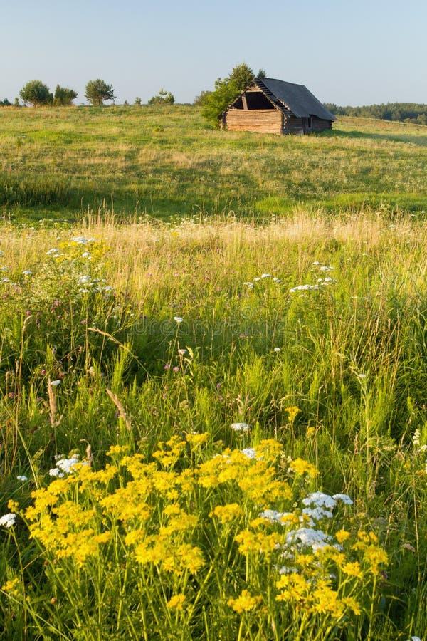 Kwitnąca łąka z Starą stajnią obrazy stock