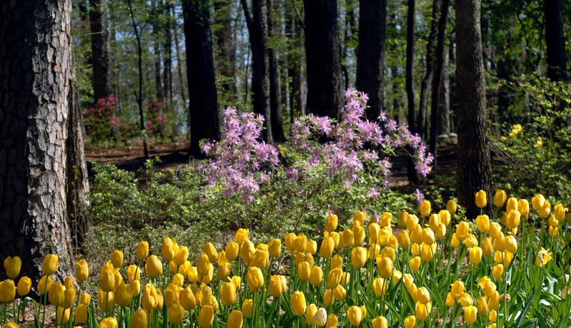 kwitnąca wiosna fotografia stock
