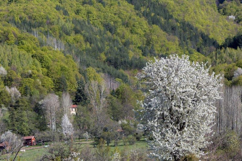 Kwitnące wiosen góry Bułgaria obrazy royalty free