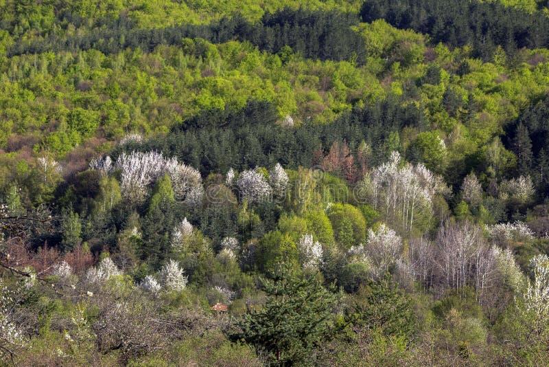 Kwitnące wiosen góry Bułgaria zdjęcia royalty free