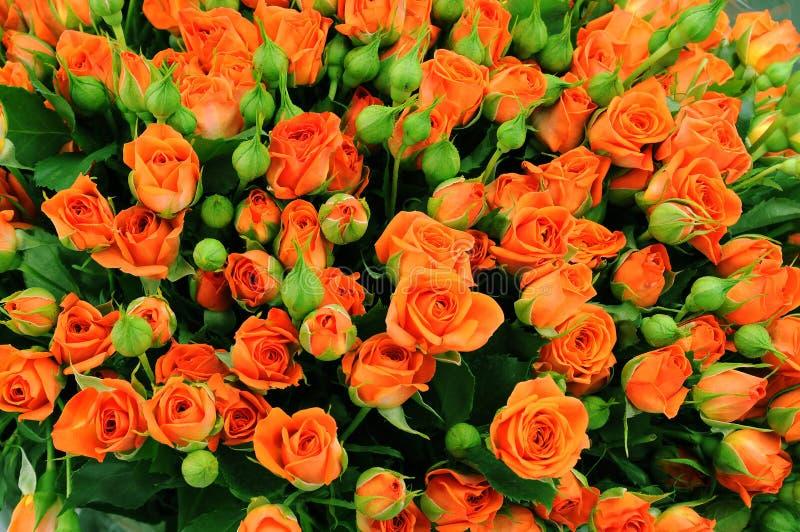 kwitnącego bukieta ogromne róże zdjęcie royalty free