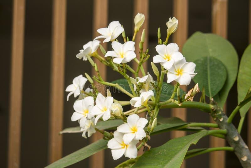 Kwitnący biały wildflower fotografia royalty free