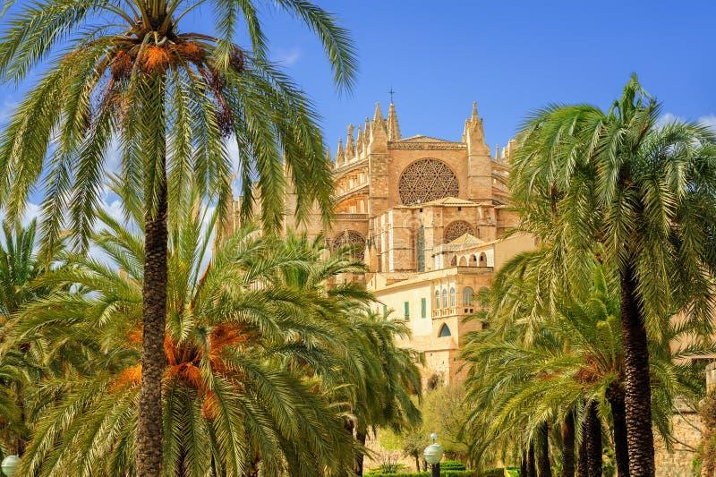 Kwitnący czereśniowy drzewo w katedralnym ogródzie, Palma de Mallorca, zdjęcia royalty free