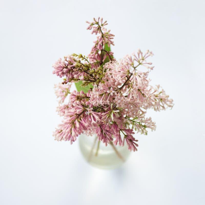Kwitnący drobny różowy bez w szklanej wazie fotografia royalty free